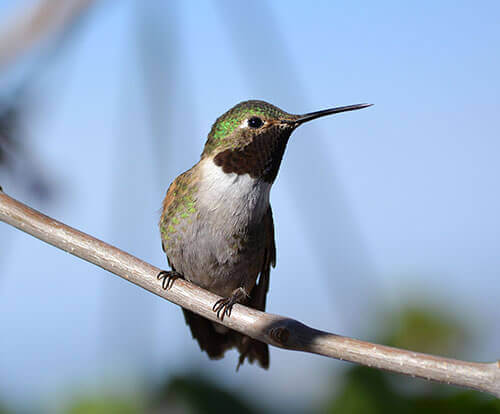 tips attracting humminbirds
